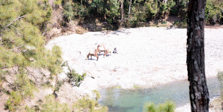 Glacier Stream Opposite  RiverSide Paradise